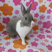 Adopt A Pet :: Aura - Scotts Valley, CA