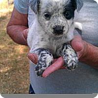 Adopt A Pet :: Sinclair - Conway, AR