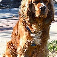 Adopt A Pet :: Qunicy - Simi Valley, CA