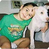 Adopt A Pet :: Bonzai - Mesa, AZ