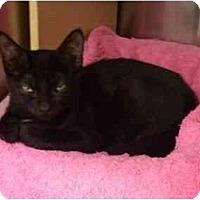 Adopt A Pet :: Sophie - Greenville, SC