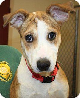 Terrier (Unknown Type, Small)/Beagle Mix Dog for adoption in McDonough, Georgia - Mia