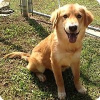 Adopt A Pet :: Charisma - New Canaan, CT