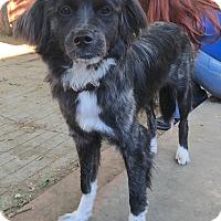 Adopt A Pet :: Bunny - Van Nuys, CA