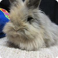 Adopt A Pet :: Kashi - Newport, DE