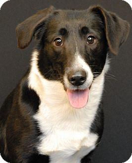 Border Collie Mix Dog for adoption in Newland, North Carolina - Glitter