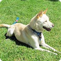 Adopt A Pet :: Keeper - Los Angeles, CA