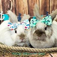 Adopt A Pet :: Arwen & Rosie - Little Rock, AR