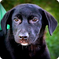 Adopt A Pet :: Lennox ~ meet me! - Glastonbury, CT