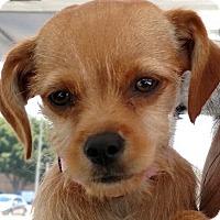 Adopt A Pet :: Athena - San Diego, CA