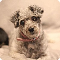 Adopt A Pet :: Nova - El Cajon, CA