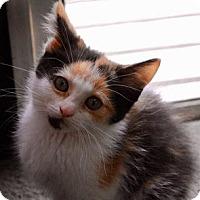 Adopt A Pet :: autum - Olivet, MI