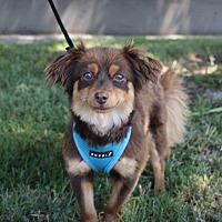 Adopt A Pet :: Reggie - Lodi, CA