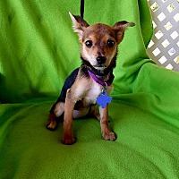 Adopt A Pet :: Pink - Philadelphia, PA