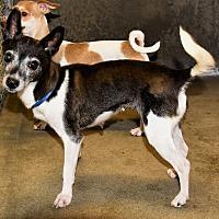 Adopt A Pet :: Bubbles - Las Vegas, NV