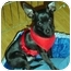 Photo 4 - Chihuahua Dog for adoption in Quail Valley, California - Cowboy