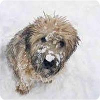 Adopt A Pet :: Bram ADOPTION PENDING - Antioch, IL