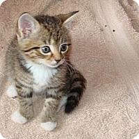Adopt A Pet :: Bailey - Spotsylvania, VA