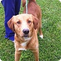 Adopt A Pet :: Cole - New Canaan, CT