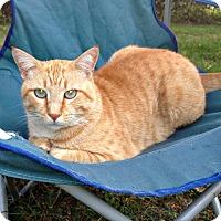 Adopt A Pet :: Spaz - Bentonville, AR
