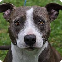 Adopt A Pet :: Savannah - Gainesville, FL