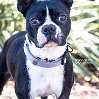 Adopt A Pet :: Dodge - Gainesville, FL
