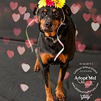 Adopt A Pet :: Cecily - Point, TX