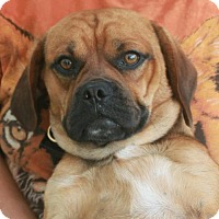 Adopt A Pet :: Buster-PENDING - Garfield Heights, OH