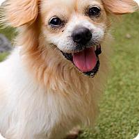 Adopt A Pet :: Herbert - Memphis, TN