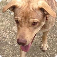 Adopt A Pet :: Della - Boston, MA