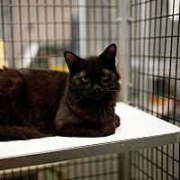 Adopt A Pet :: Stroll - Raleigh, NC