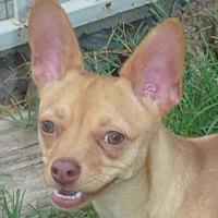 Adopt A Pet :: Jericho - Phoenix, AZ