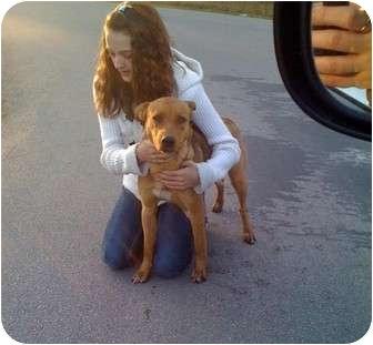 Golden Retriever/Labrador Retriever Mix Dog for adoption in Kingwood, Texas - Champ