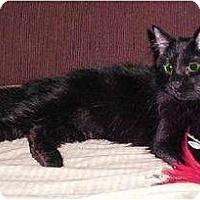 Adopt A Pet :: Goblin - Cypress, TX