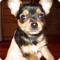 Adopt A Pet :: SPENCER - Southport, NC