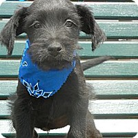 Adopt A Pet :: Maxwell - Crystal River, FL