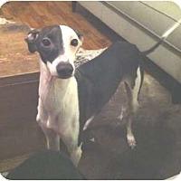 Adopt A Pet :: King - Croton, NY