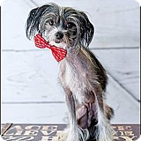 Adopt A Pet :: Ricky - Hilliard, OH