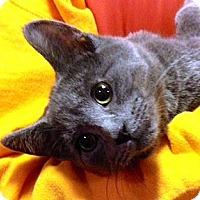 Adopt A Pet :: Gale - Green Bay, WI