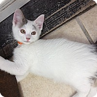 Adopt A Pet :: Bear - Byron Center, MI