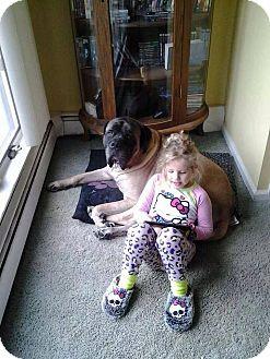Mastiff Dog for adoption in Sagaponack, New York - Sammy