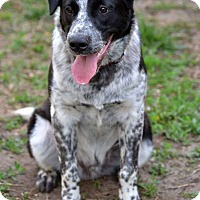 Adopt A Pet :: Stetson - Fort Riley, KS