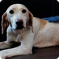 Adopt A Pet :: Dixie - Philadelphia, PA