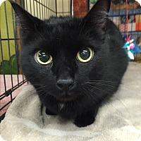 Adopt A Pet :: Chief - Kelso/Longview, WA