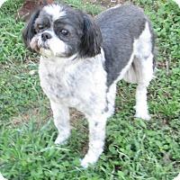 Adopt A Pet :: Gigi - Lockhart, TX