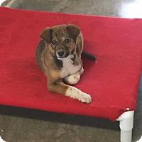 Adopt A Pet :: Lotus - Woodward, OK