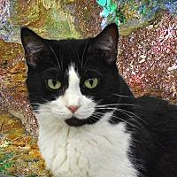 Adopt A Pet :: Snookums - Pineville, NC