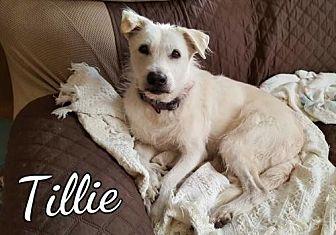 Terrier (Unknown Type, Medium) Mix Dog for adoption in Mobile, Alabama - Tillie