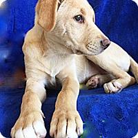 Adopt A Pet :: Poppie - BIRMINGHAM, AL