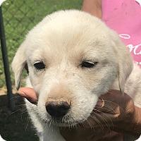 Adopt A Pet :: Caden - Glastonbury, CT